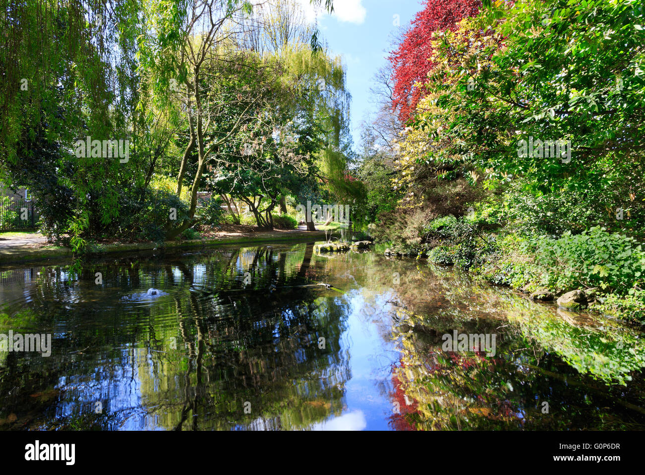 Trees and foliage with reflections in canal water with ripples at the New River Walk, Canonbury, London - Stock Image