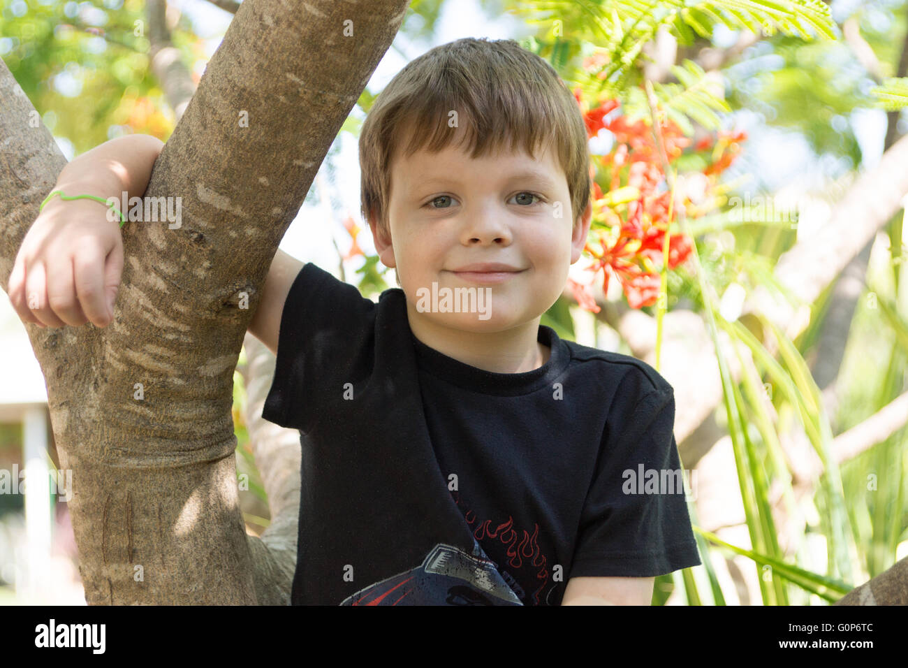 Boy sitting in Poinciana tree smiling - Stock Image
