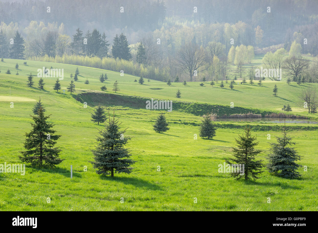 Hills fresh green grass small spruces bright spring sunlight - Stock Image