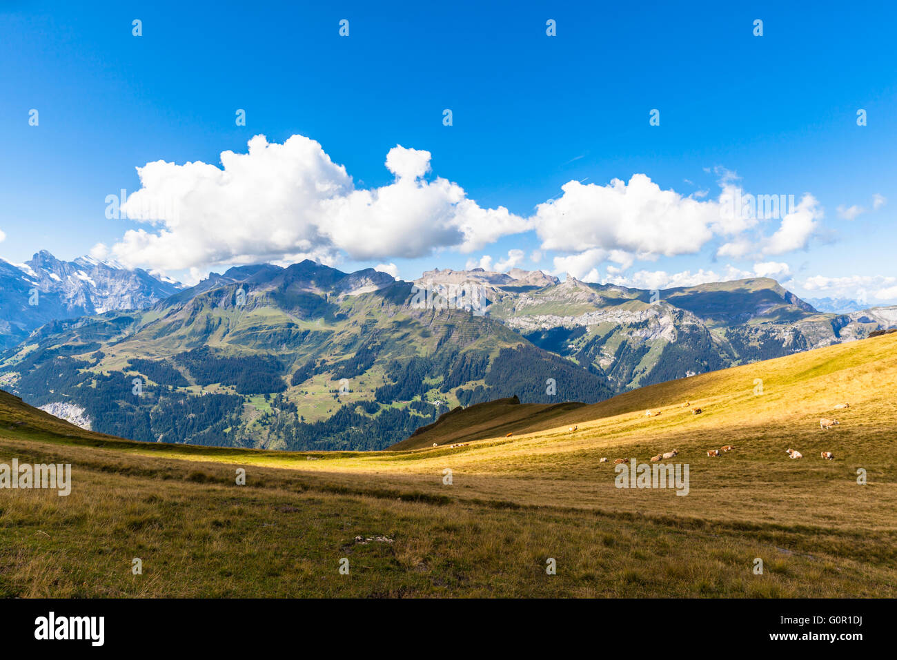 Panorama view of the Alps on Bernese Oberland and the Lauterbrunnen valley from Mannlichen station, Switzerland. - Stock Image
