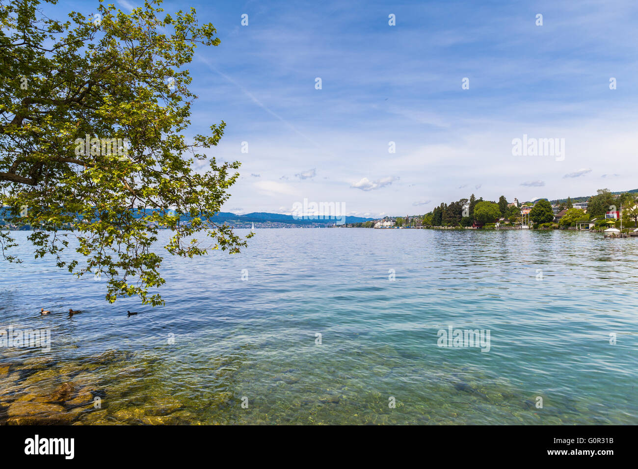 Beautiful view of Zurich Lake with ducks and trees in foreground, Switzerland. - Stock Image