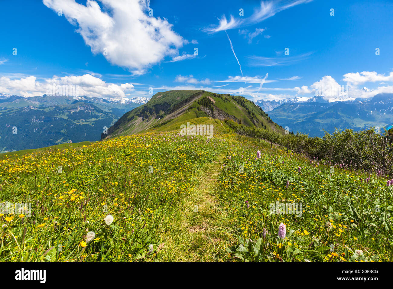 Stunning view on the hiking path on Bernese Oberland with beautiful flowers in foreground and mountain range of - Stock Image