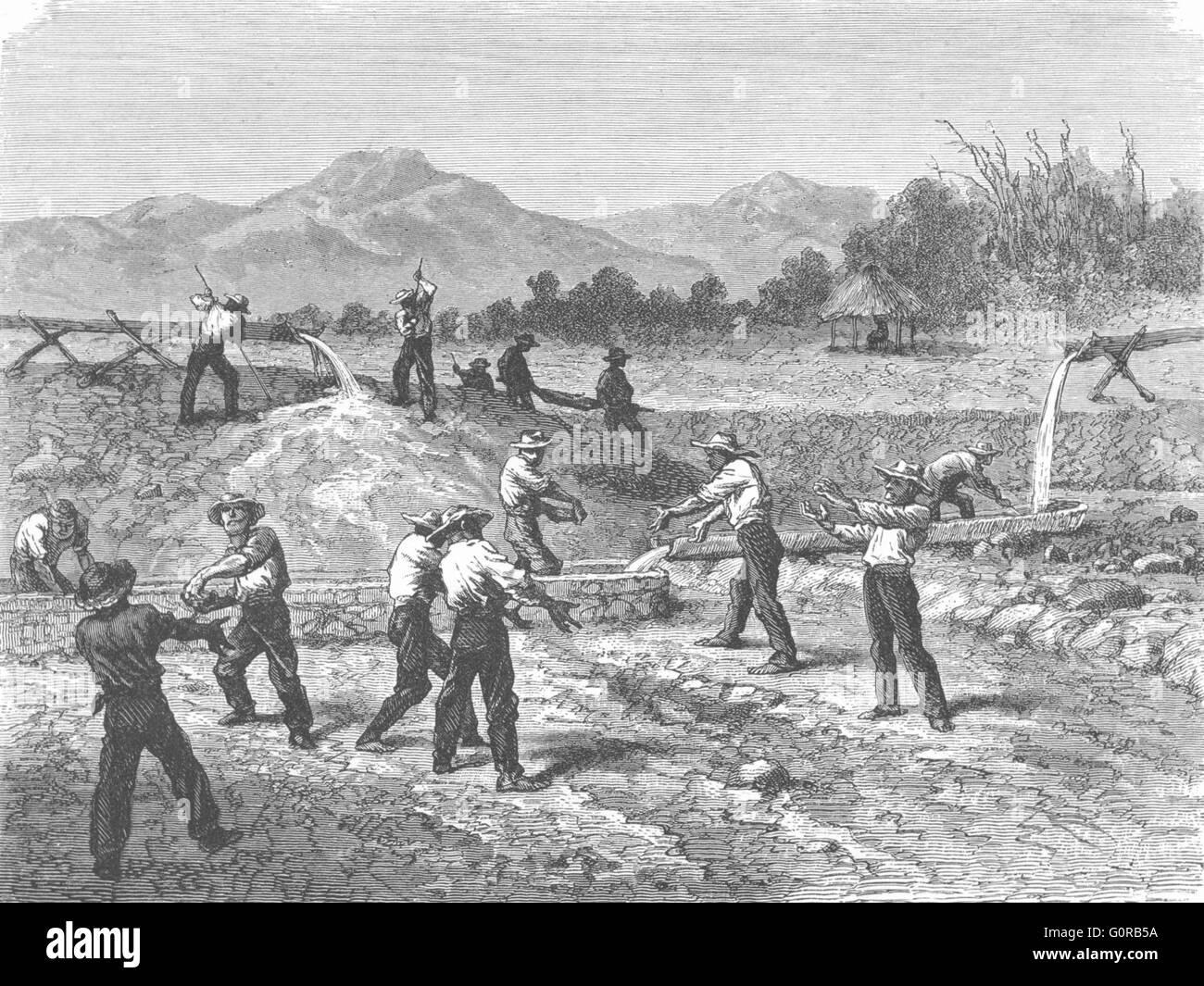 MINING: Long Tom Gold-Washing: at work, antique print 1880 - Stock Image