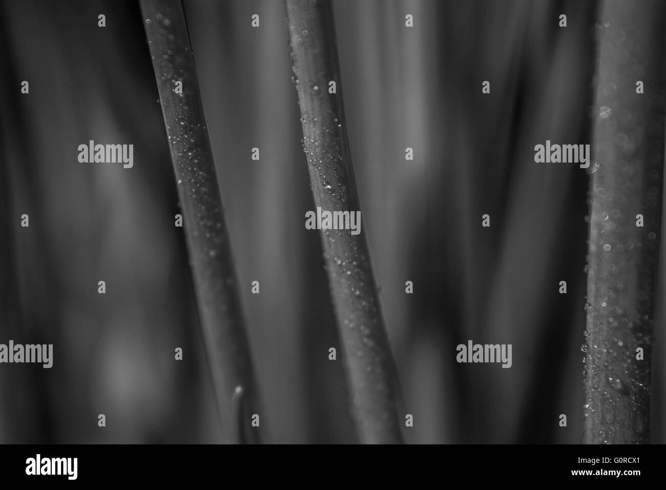 stems - Stock Image