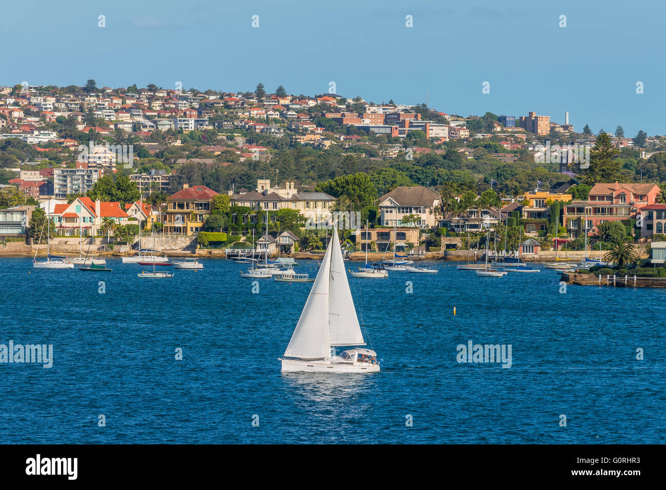 Sailing boats and residential housing in Rose Bay, Sydney, New South Wales, Australia - Stock Image