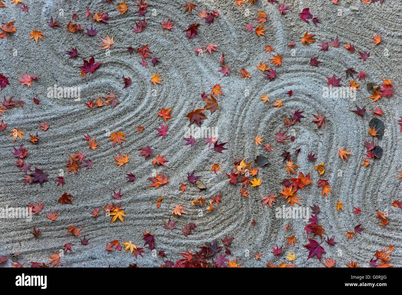 Early morning sunlight illuminates the Zen garden of raked white sand sprinkled with fallen autumn leaves, at Hosen - Stock Image