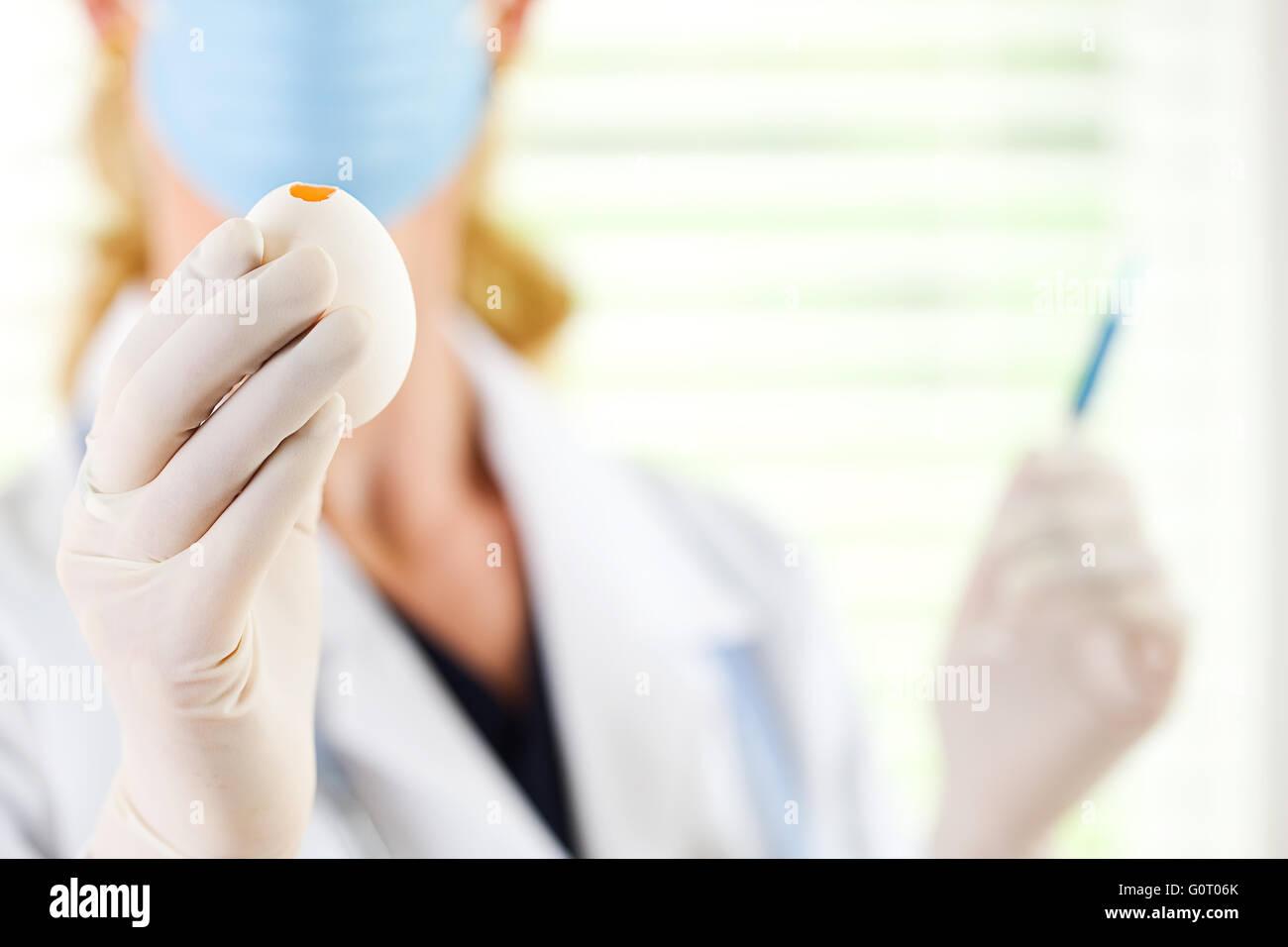 Female researcher/doctor inoculating flu virus into chicken eggs. - Stock Image