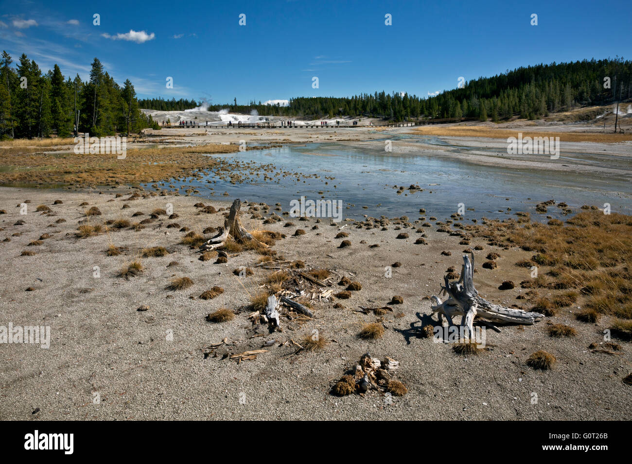 WY01629-00...WYOMING - Stumps of dead trees reflect changing conditions at Norris Geyser Basin in Yellowstone National - Stock Image
