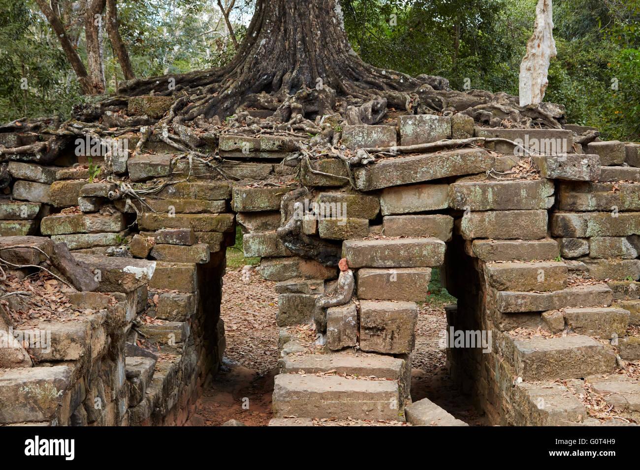 Tree growing on ruins of ancient Spean Thmor bridge, Angkor World Heritage Site, Siem Reap, Cambodia - Stock Image