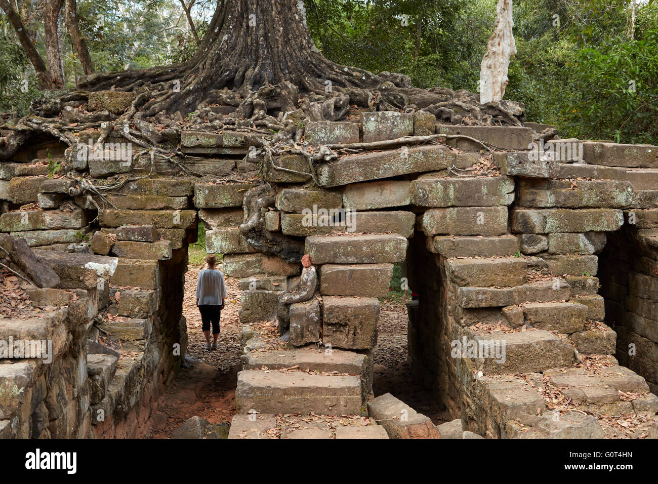 Tourist under tree growing on ruins of ancient Spean Thmor bridge, Angkor World Heritage Site, Siem Reap, Cambodia - Stock Image