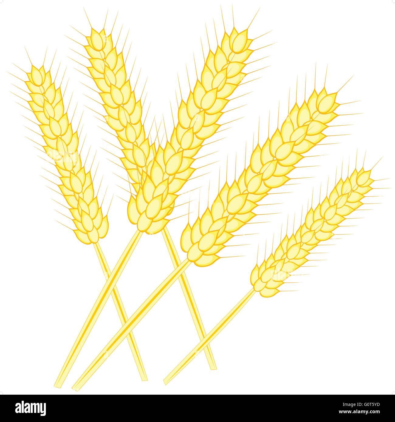 Ear of the wheat - Stock Vector