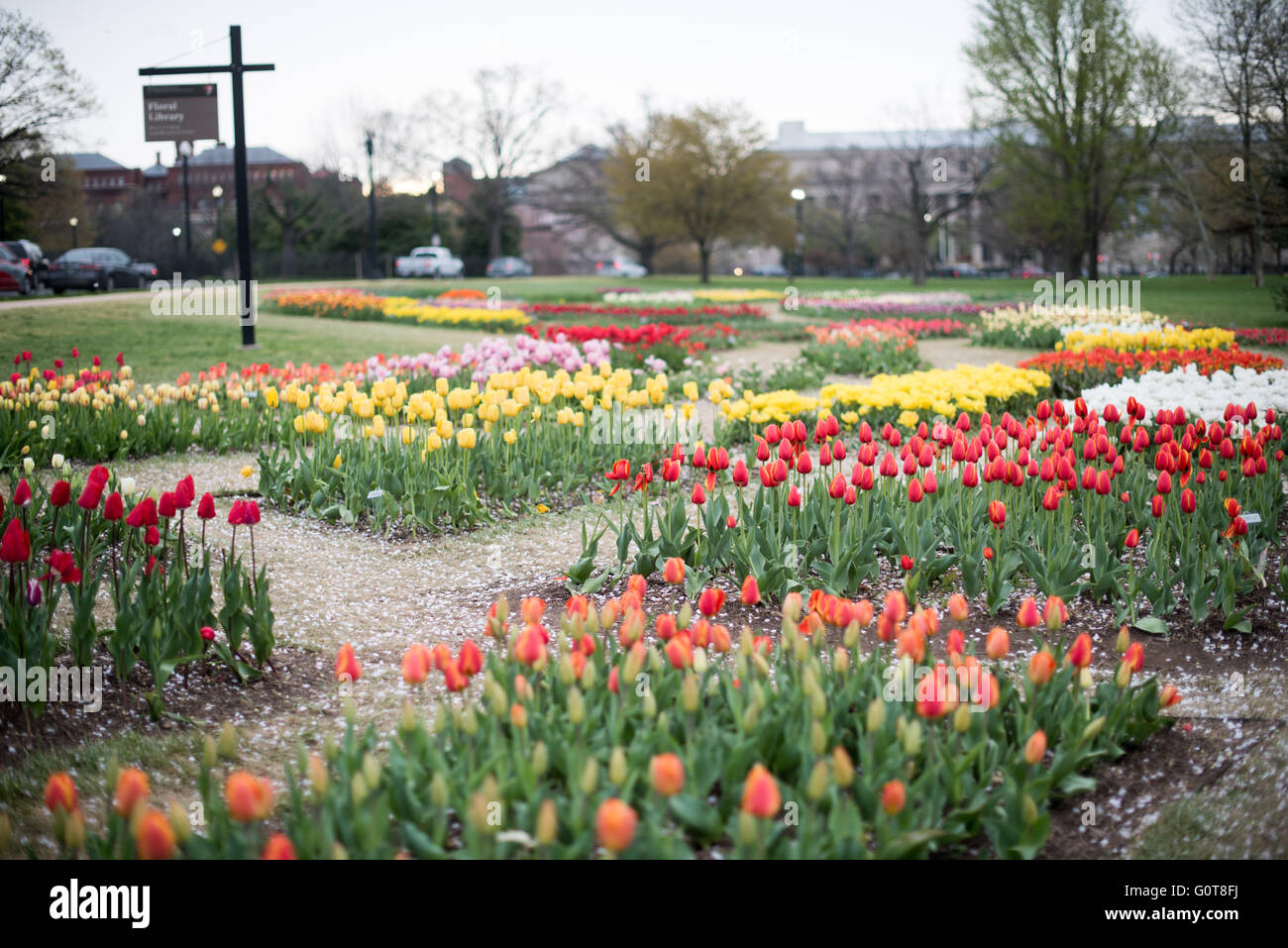 The Floral Library is a small garden patch run by the National Park Service. It's located next to the Tidal Basin Stock Photo