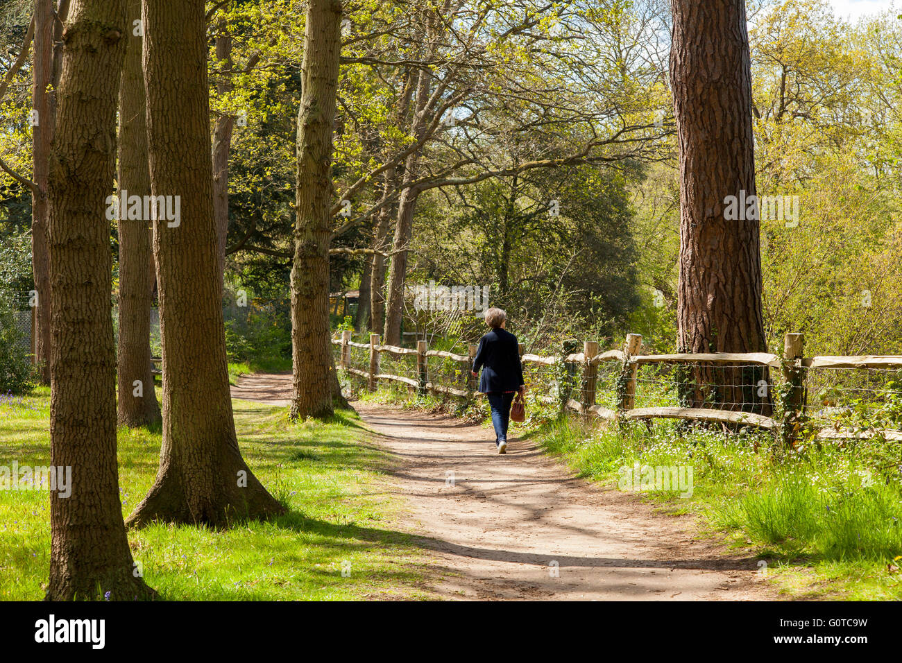 A woman walks through a path in the woods on a bright, sunny day in England - Stock Image