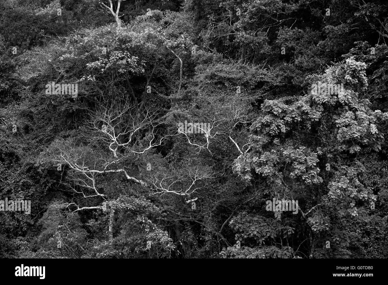 Greenery in Aguateca located in northern Guatemala's Petexbatun Basin, in the department of Peten. Guatemala - Stock Image