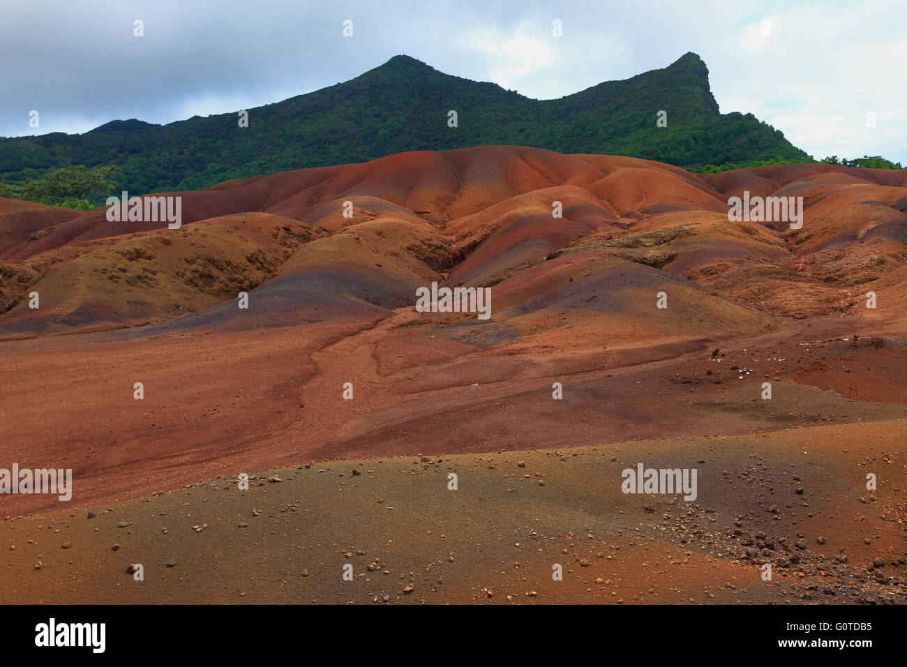 The coloured earth of Chamarel in Mauritius is caused by a natural phenomenon  due to the chemicals present in the - Stock Image