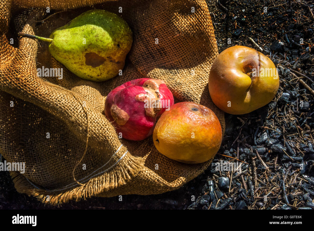 Unappealing, rotten fruit tumble from a burlap bag onto scorched ground - Stock Image