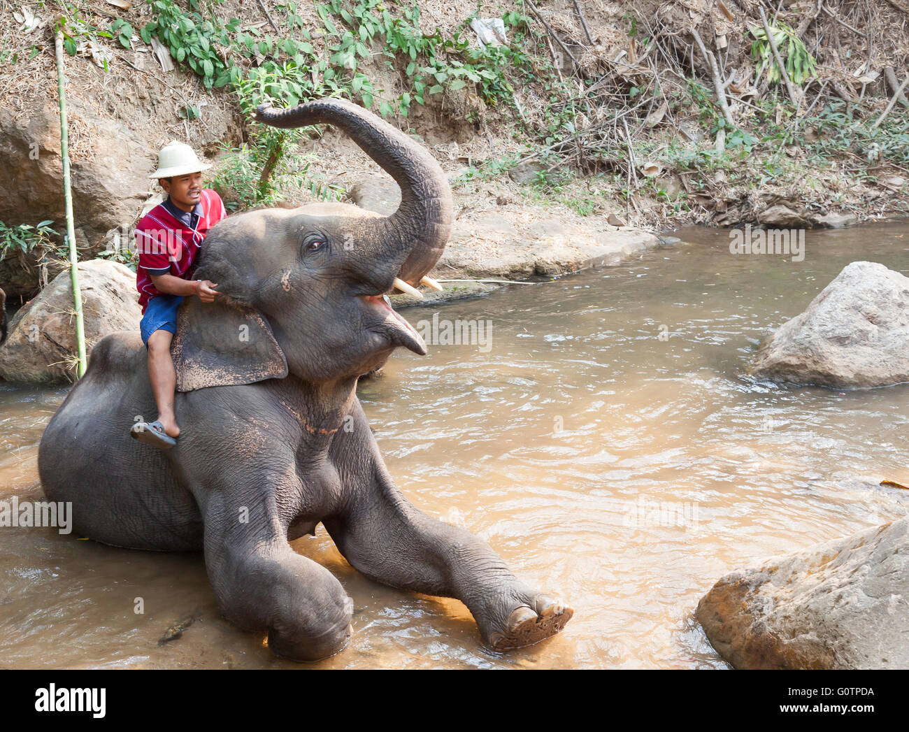 Elephant Tourist Posing riding bathing Experience at Elephant Kingdom in Chiang Rai Thailand - Stock Image