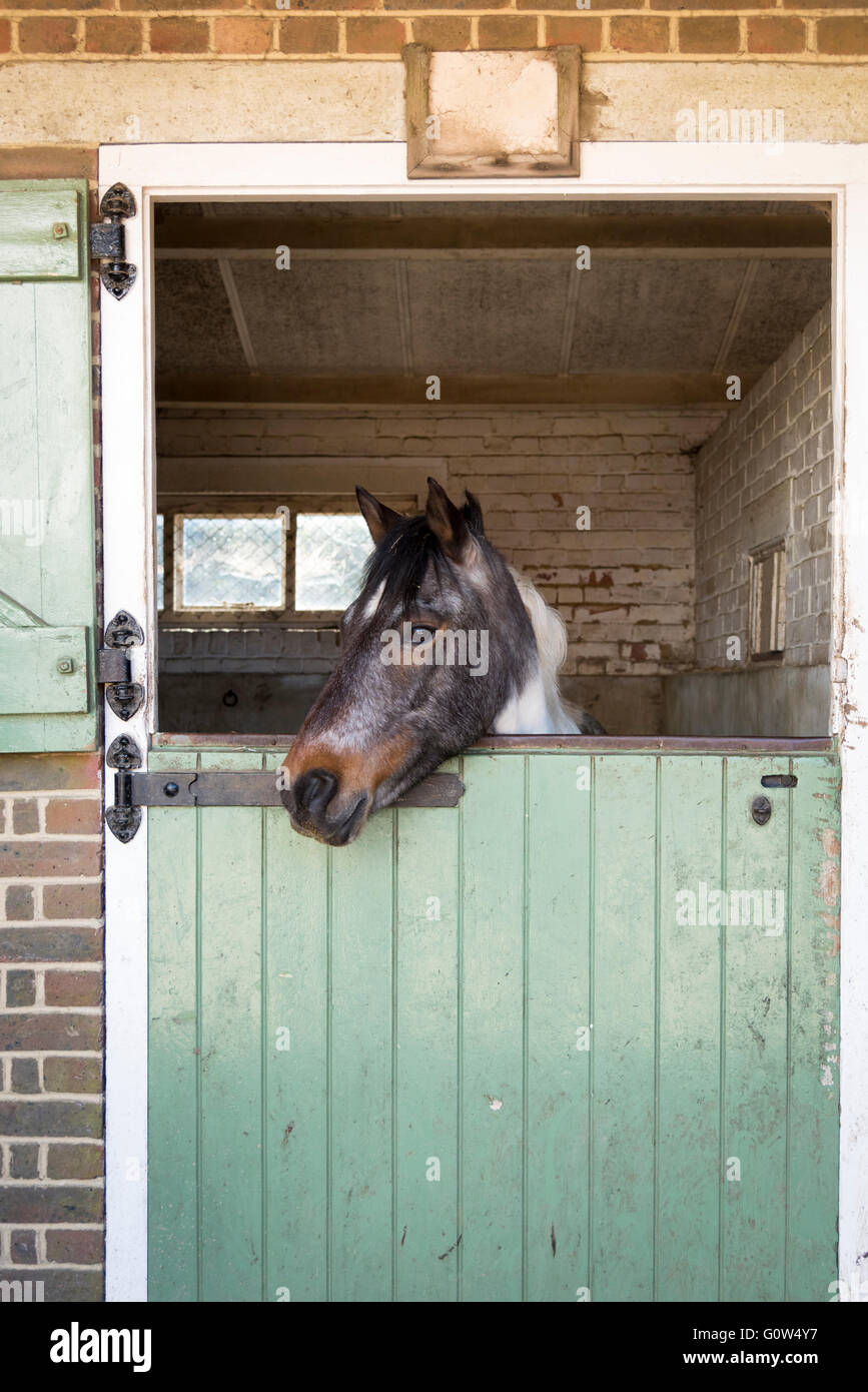 A pony or horse in a stable looking out of the stable door & A pony or horse in a stable looking out of the stable door Stock ...