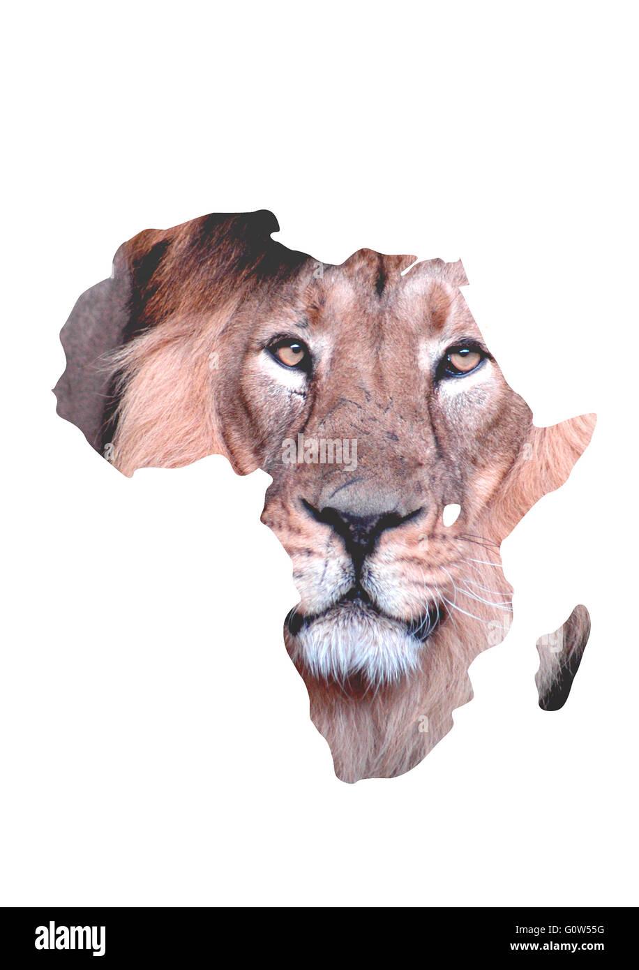 Loewe, Afrika, Symbolbild. - Stock Image