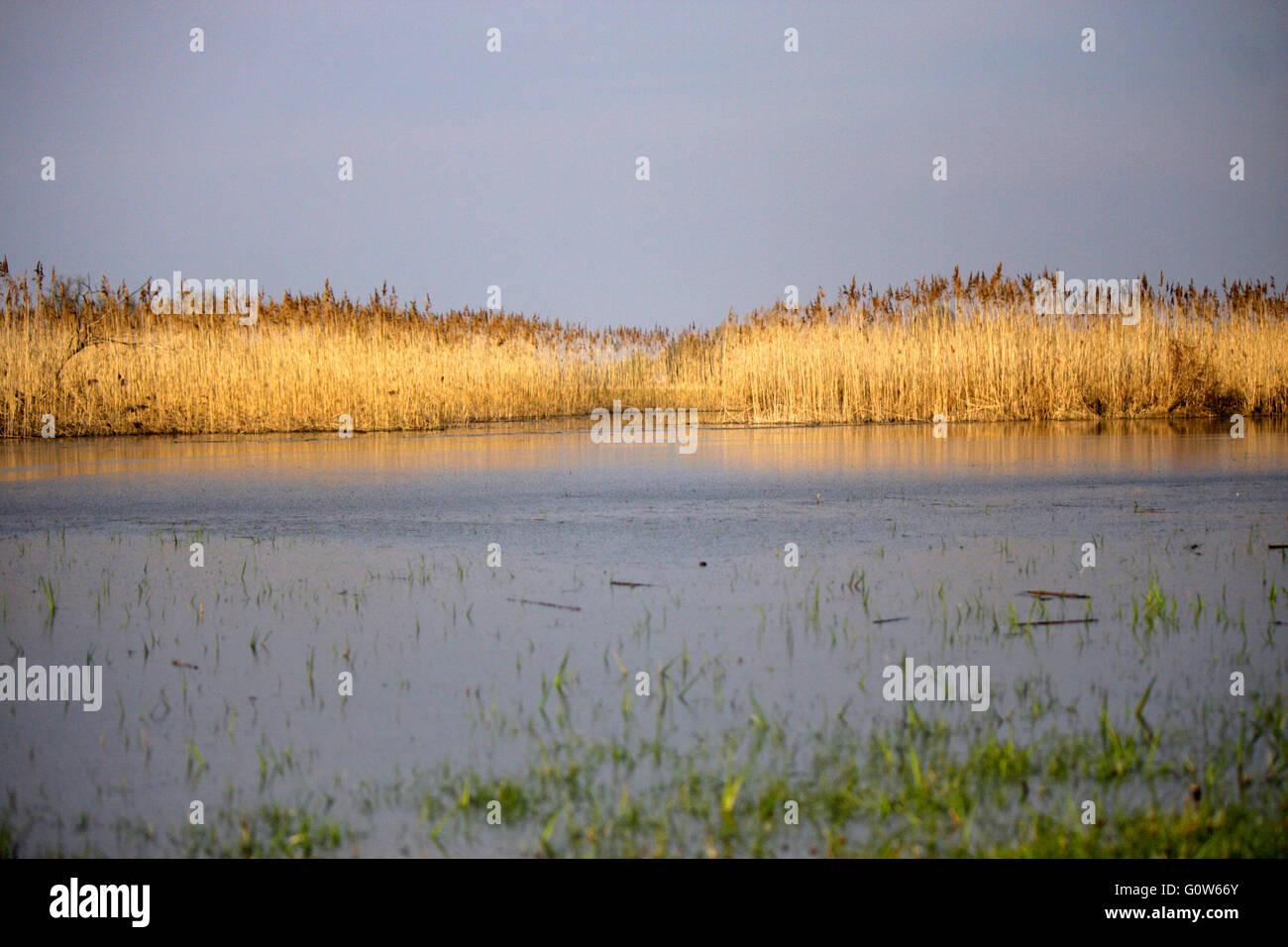 Impressionen: Nationalpark Unteres Odertal/ Oderauen, Criewen, Brandenburg. - Stock Image