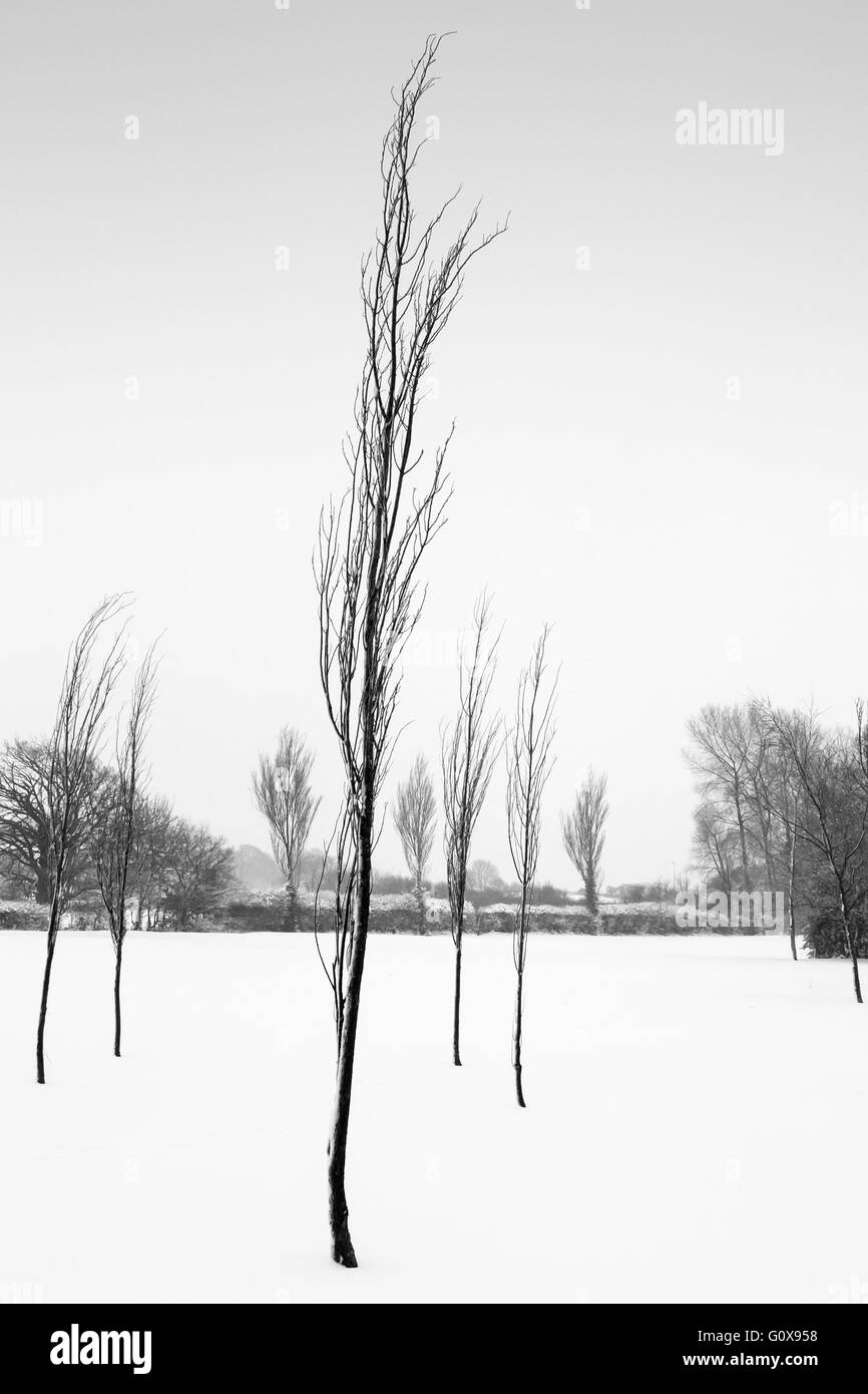 A silhouette of trees in a field of snow Stock Photo