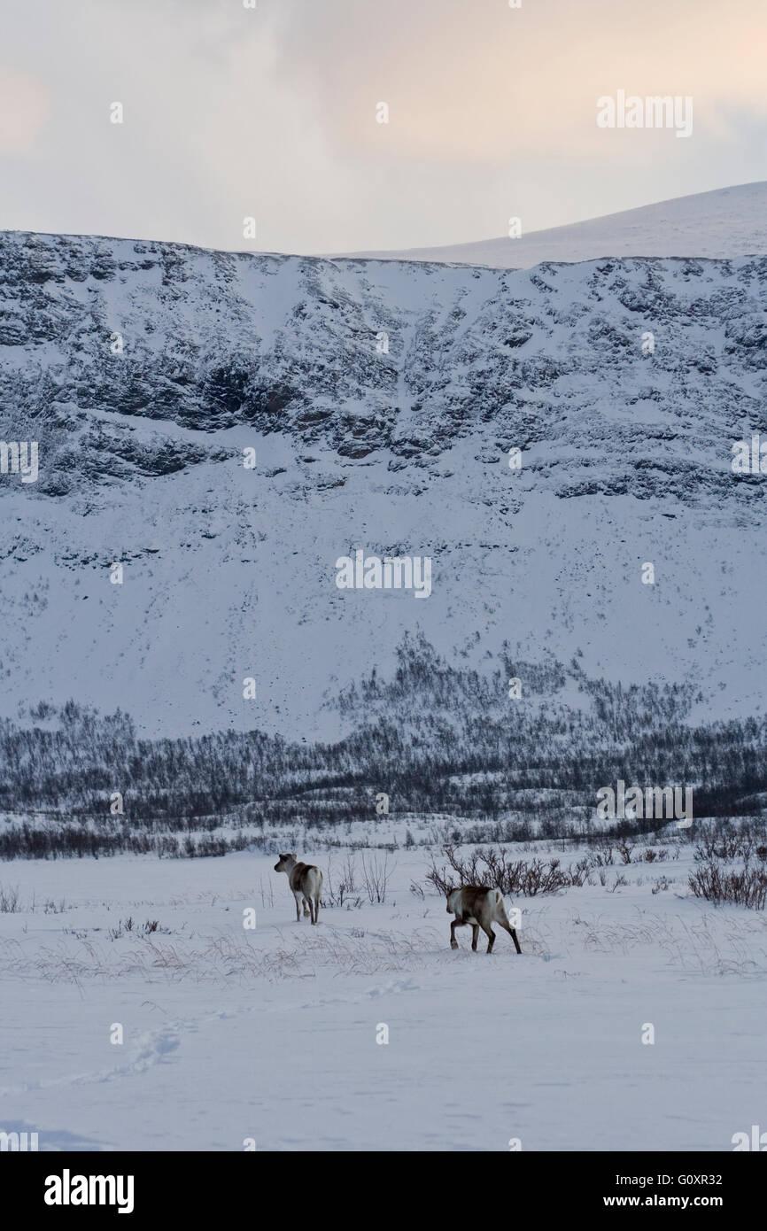 Landscape Sweden snow mountains - Stock Image