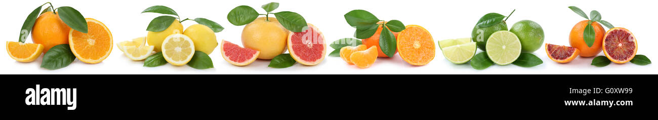 Collection of oranges lemons grapefruit fruits in a row isolated on a white background - Stock Image