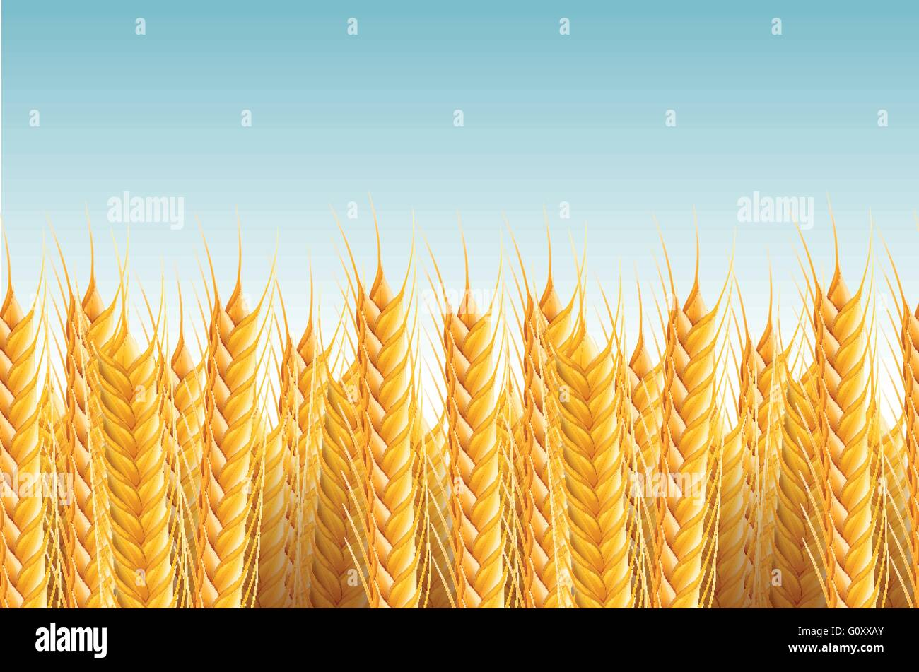 Vector realistic seamless wheat background illustration. - Stock Vector