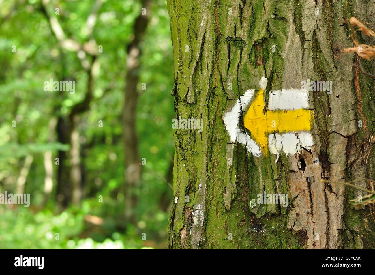 Yellow and white hiking trail signs symbols in spring on tree - Stock Image