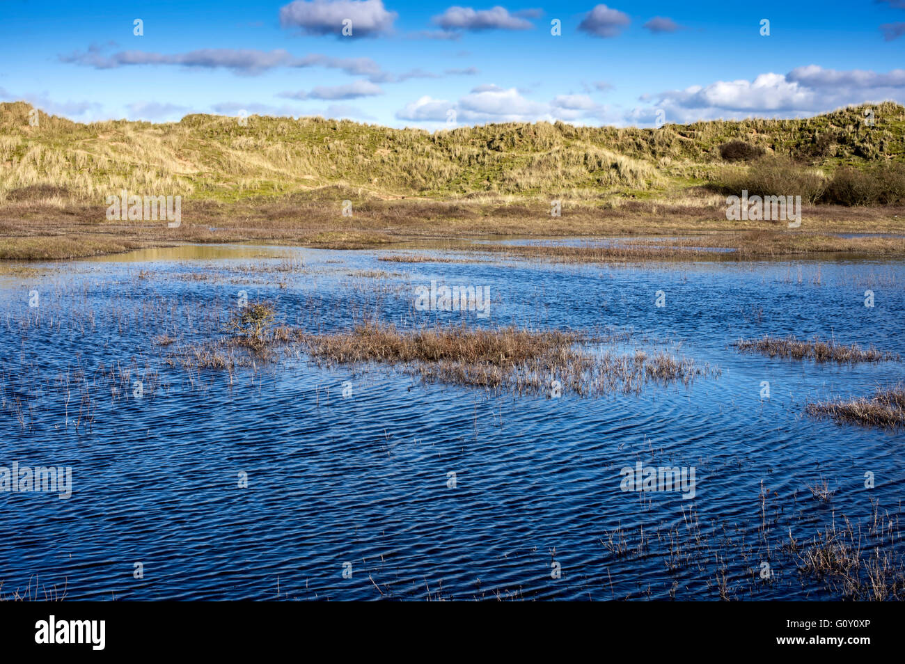 A winter dune slack. A temporary shallow pool the size and depth depends on rainfall. - Stock Image