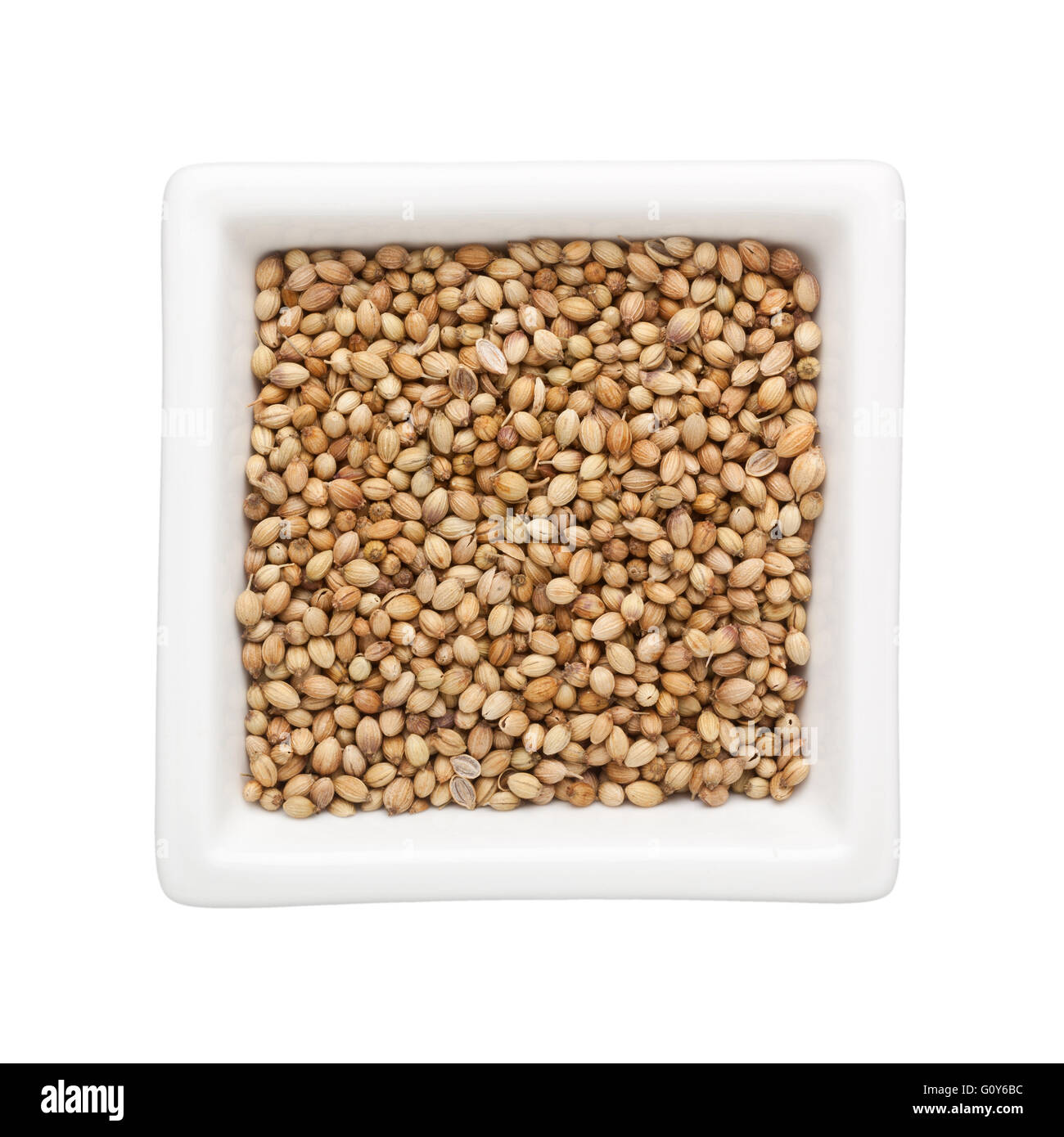 Coriander seeds in a square bowl isolated on white background - Stock Image