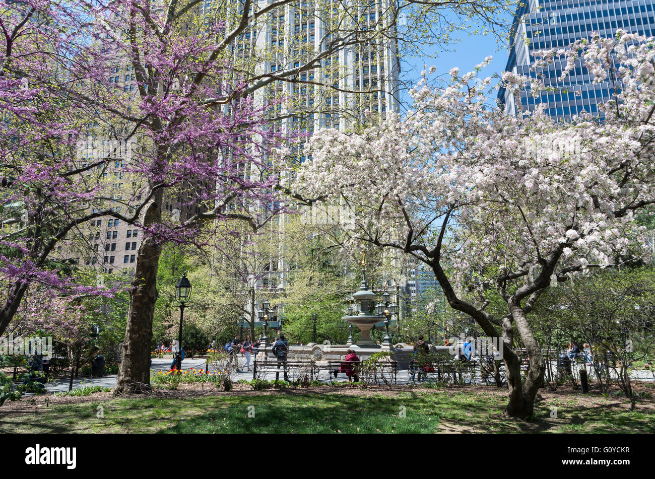 Lawn in City Hall Park, New York, in Spring with tree blossom - Stock Image