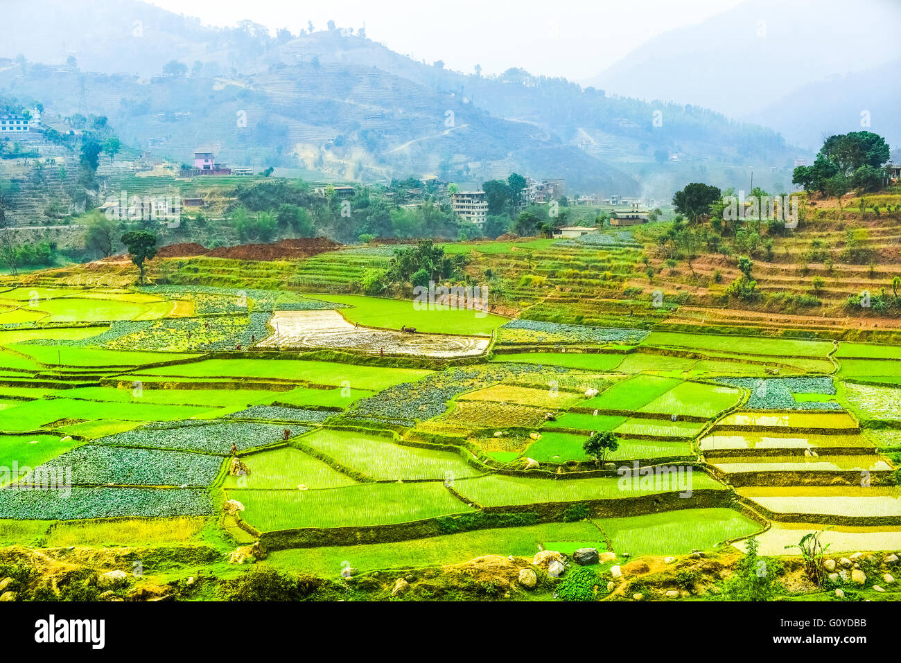 Agricultural terraces in Gorkha, Nepal. - Stock Image