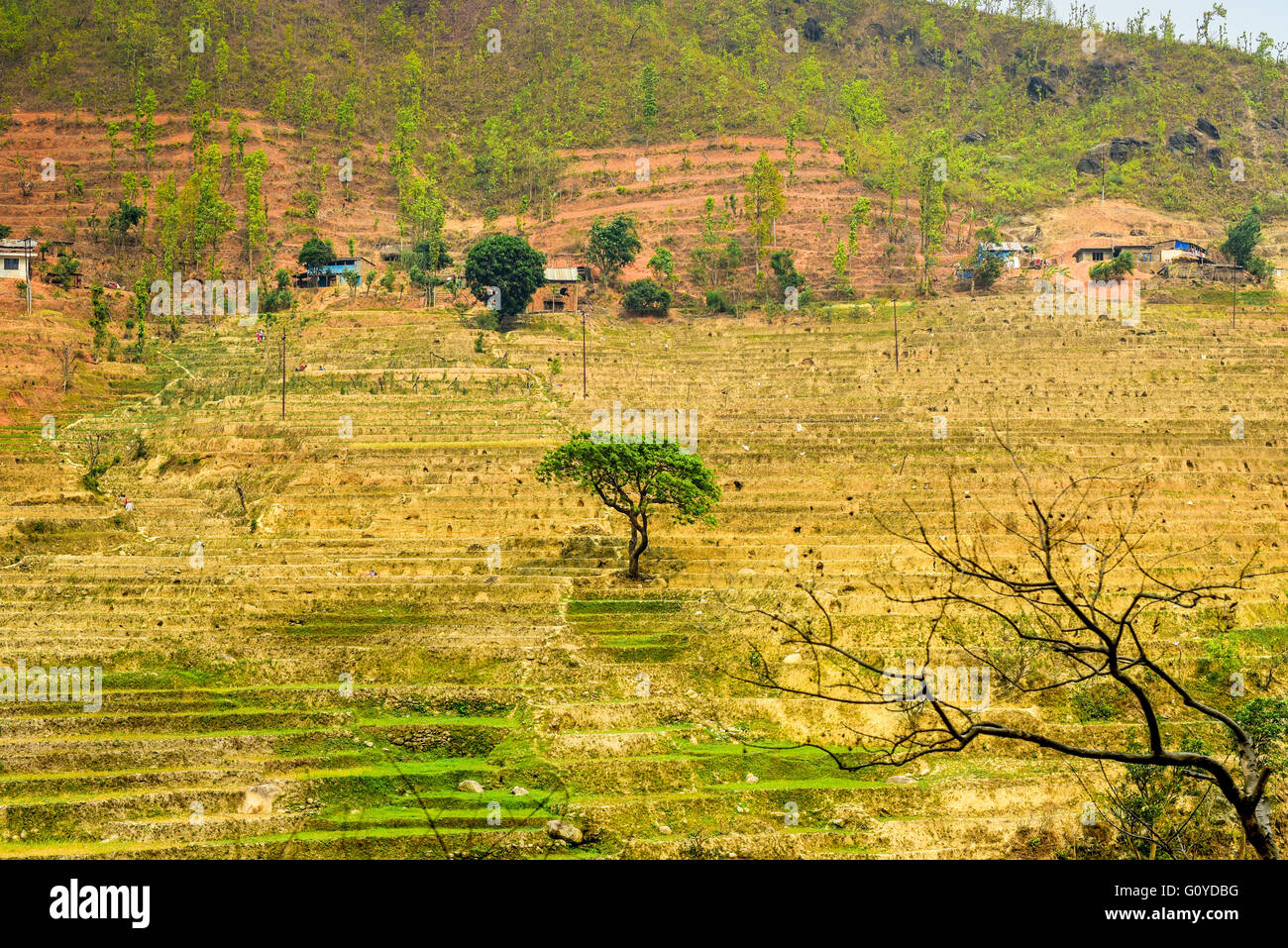 View of agricultural terraces during dry season in rural Gorkha, Nepal. - Stock Image