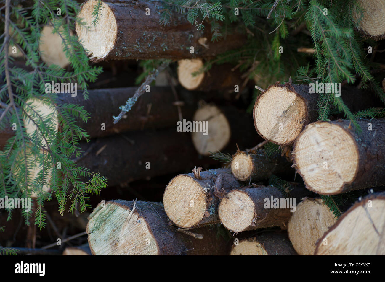 Timber in the forest. - Stock Image