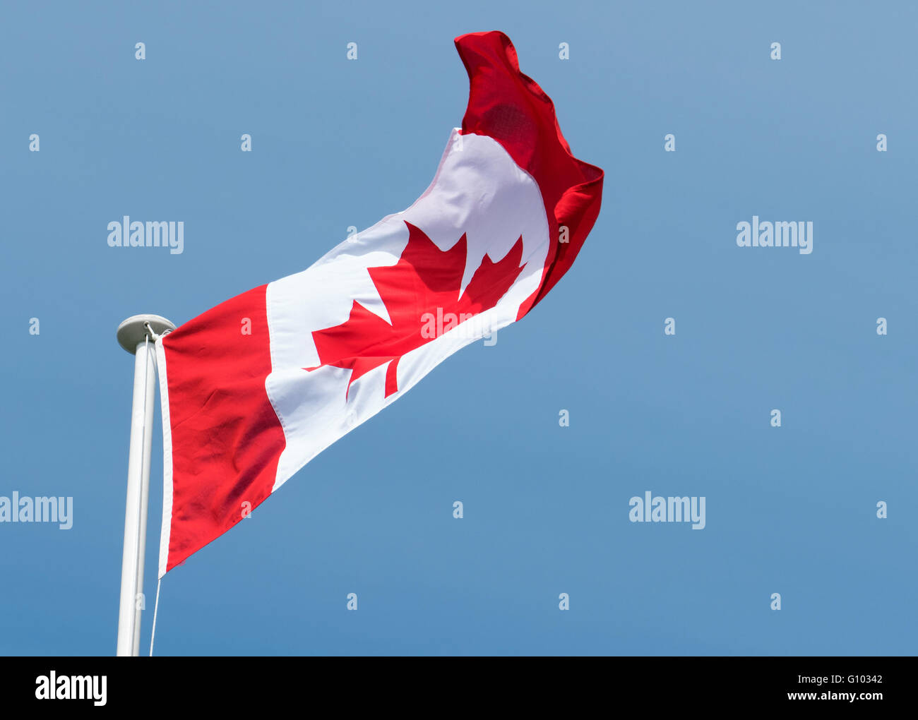 Canadian flag of Canada Maple Leaf blowing in the wind, big blue sky. - Stock Image