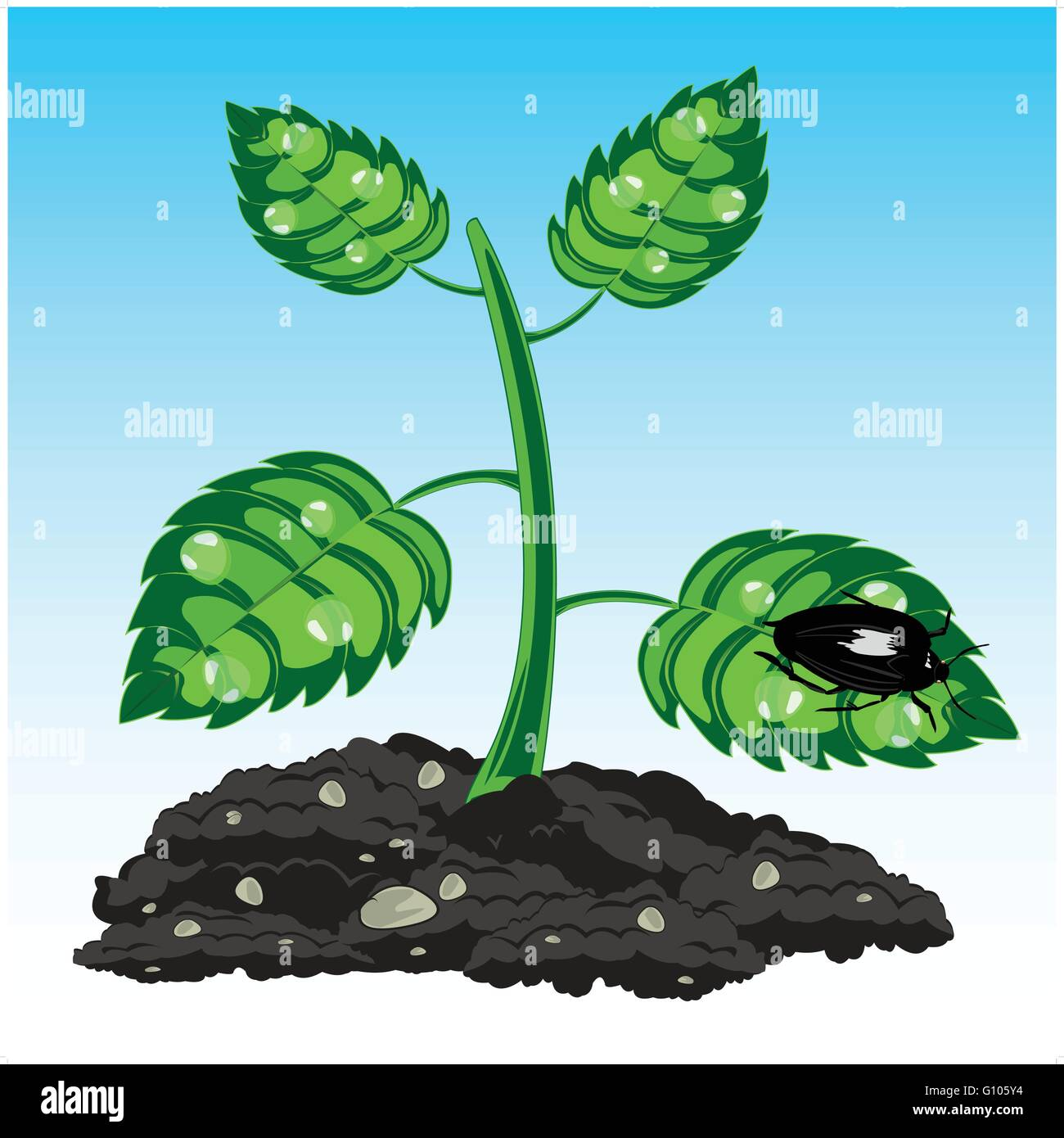 Seedling of the plant with dew and insect on sheet - Stock Vector
