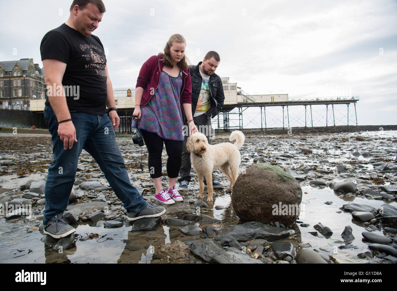 Aberystwyth Wales UK, Saturday 07 May 2016  Mystery object washes up on the beach at Aberystwyth.   After a winter - Stock Image