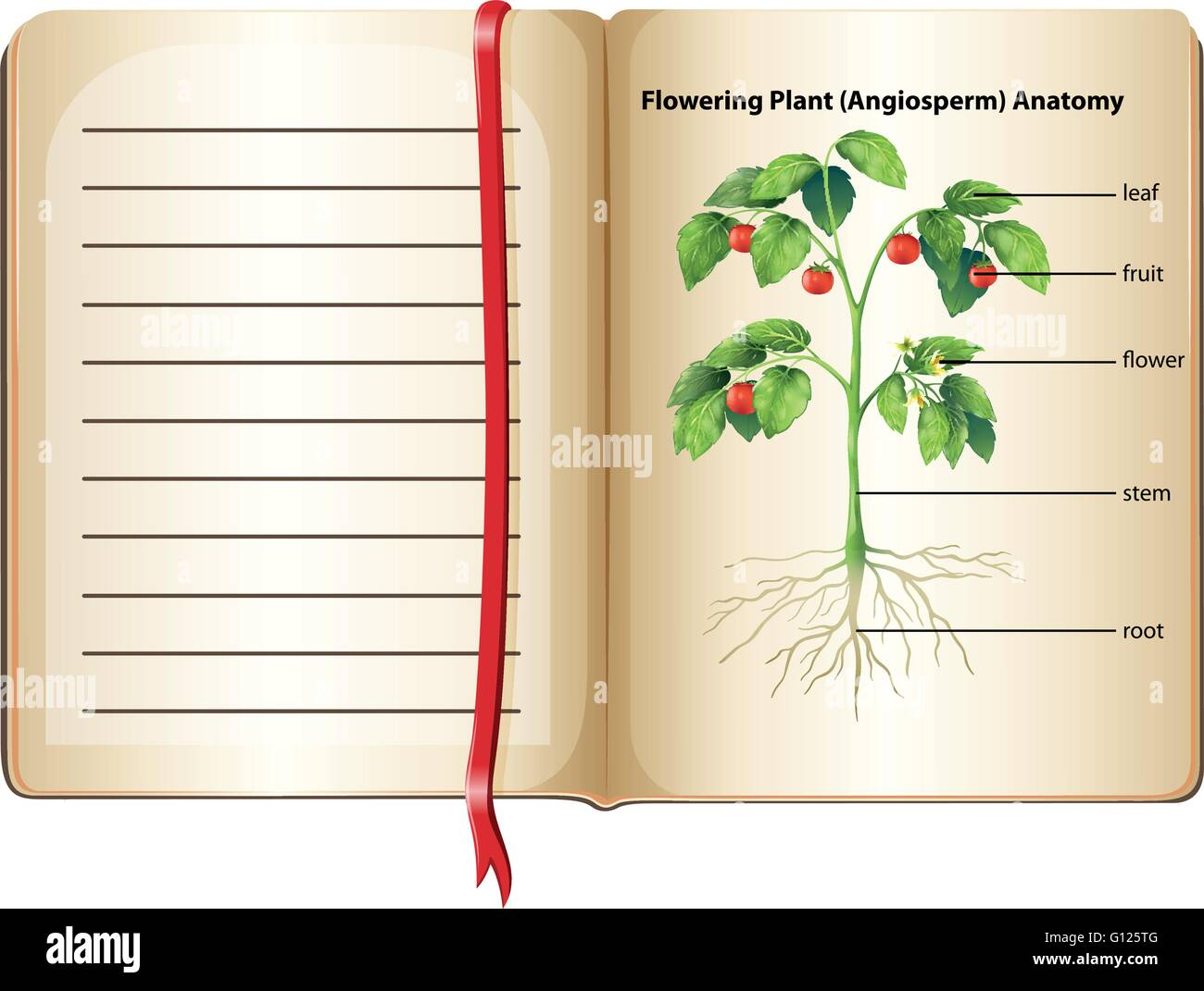 Flowering plant anatomy on page illustration Stock Vector Art ...
