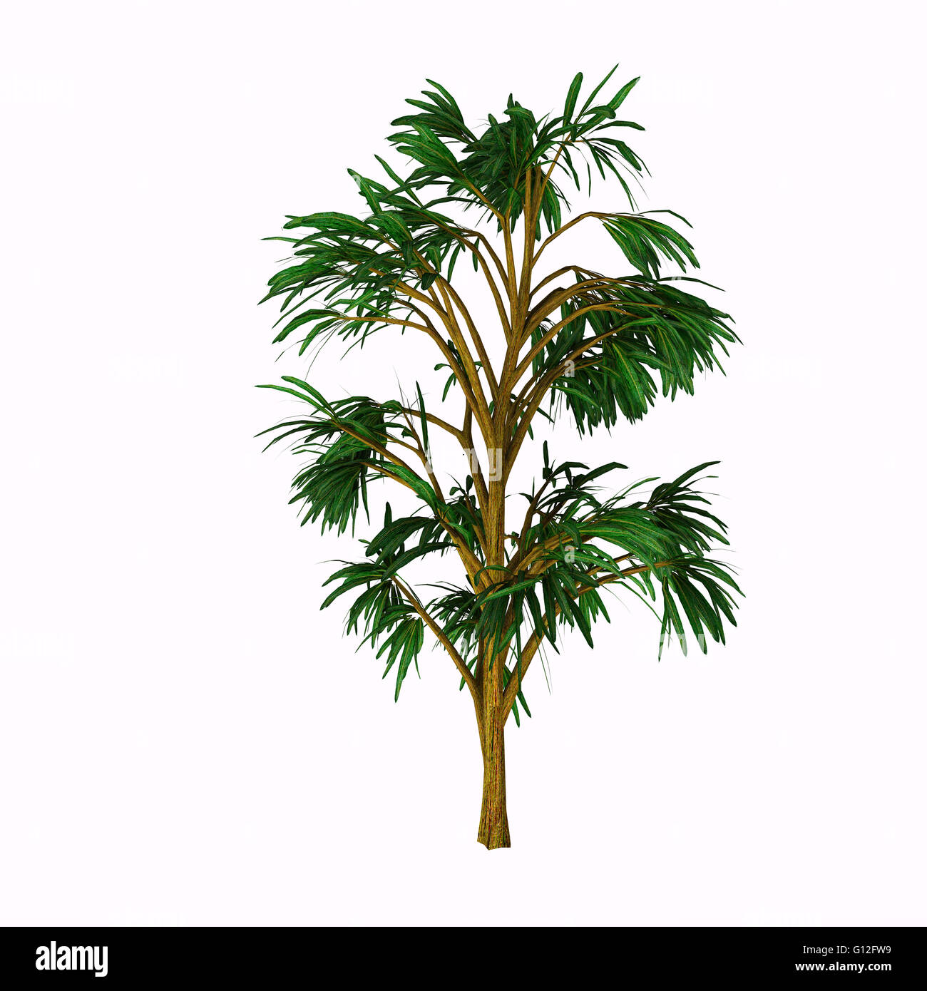 Cordaites is an important genus of extinct gymnosperms which grew on wet ground in the similar to the Everglades - Stock Image