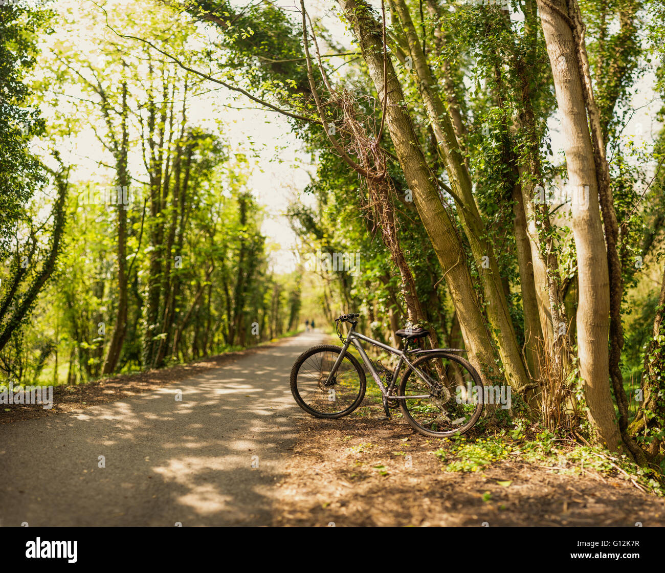 bicycle left on the path in the forest - Stock Image