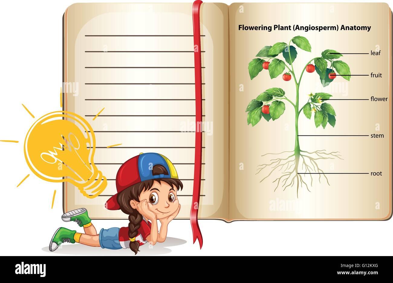 Girl and flowering plant anatomy illustration Stock Vector Art ...
