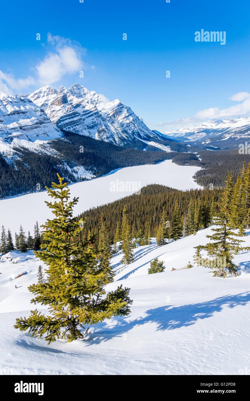 Peyto Lake viewpoint in winter,  Banff National Park, Alberta, Canada - Stock Image