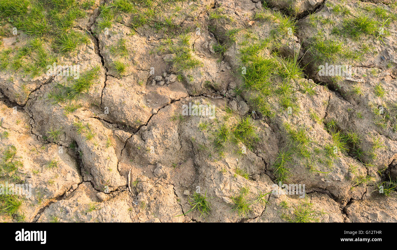 Dry soil with green grass texture background Stock Photo