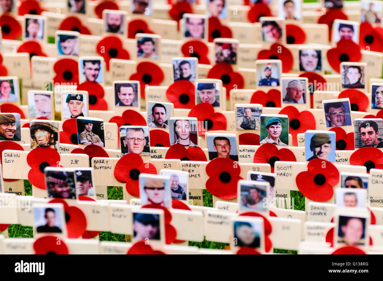 Wooden crosses with poppies and photographs in remembrance of servicemen and women killed in action. - Stock Image