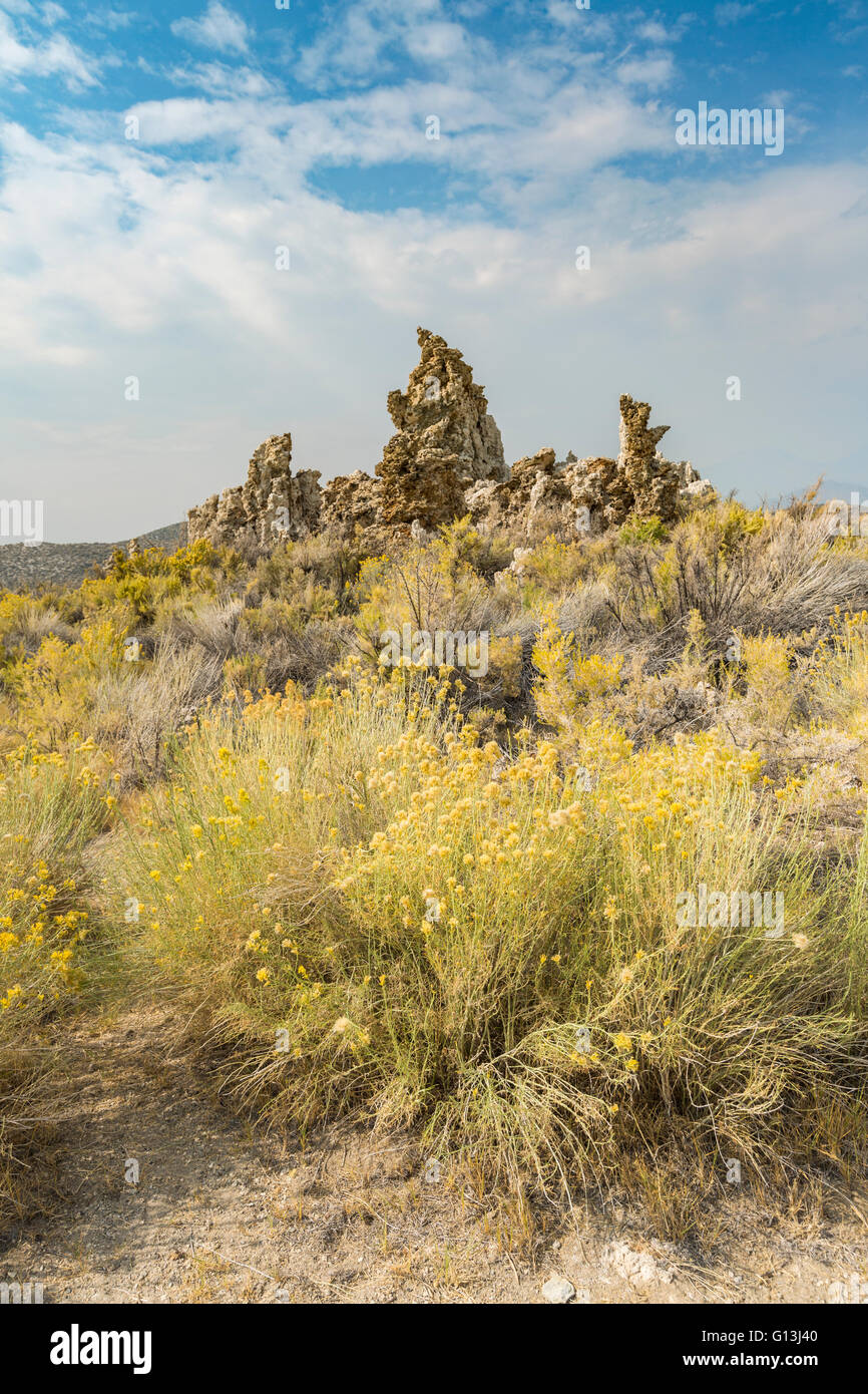 Yellow flowers and tufa formations - Stock Image