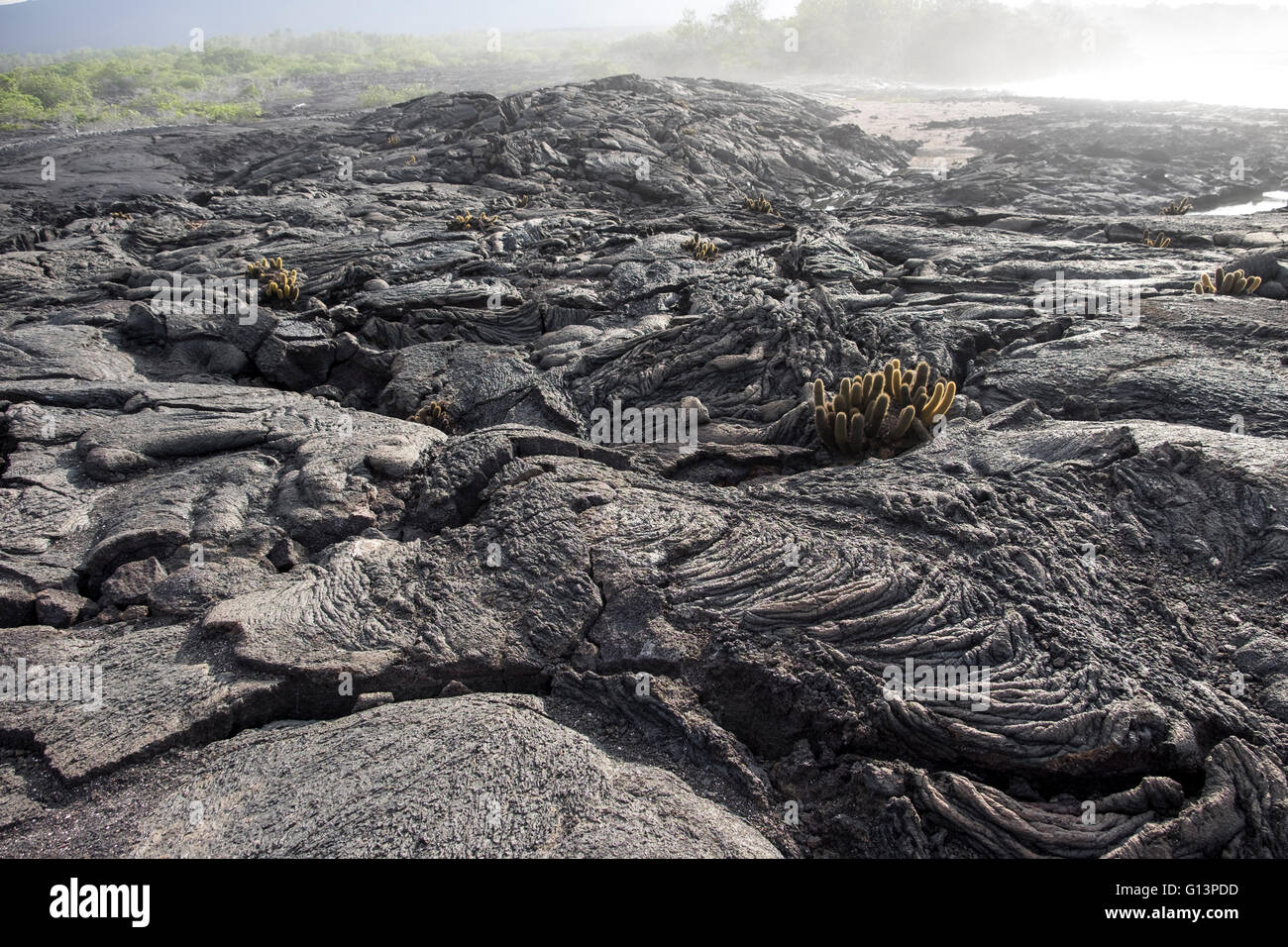 Lava rock formations in Galapagos Islands - Stock Image