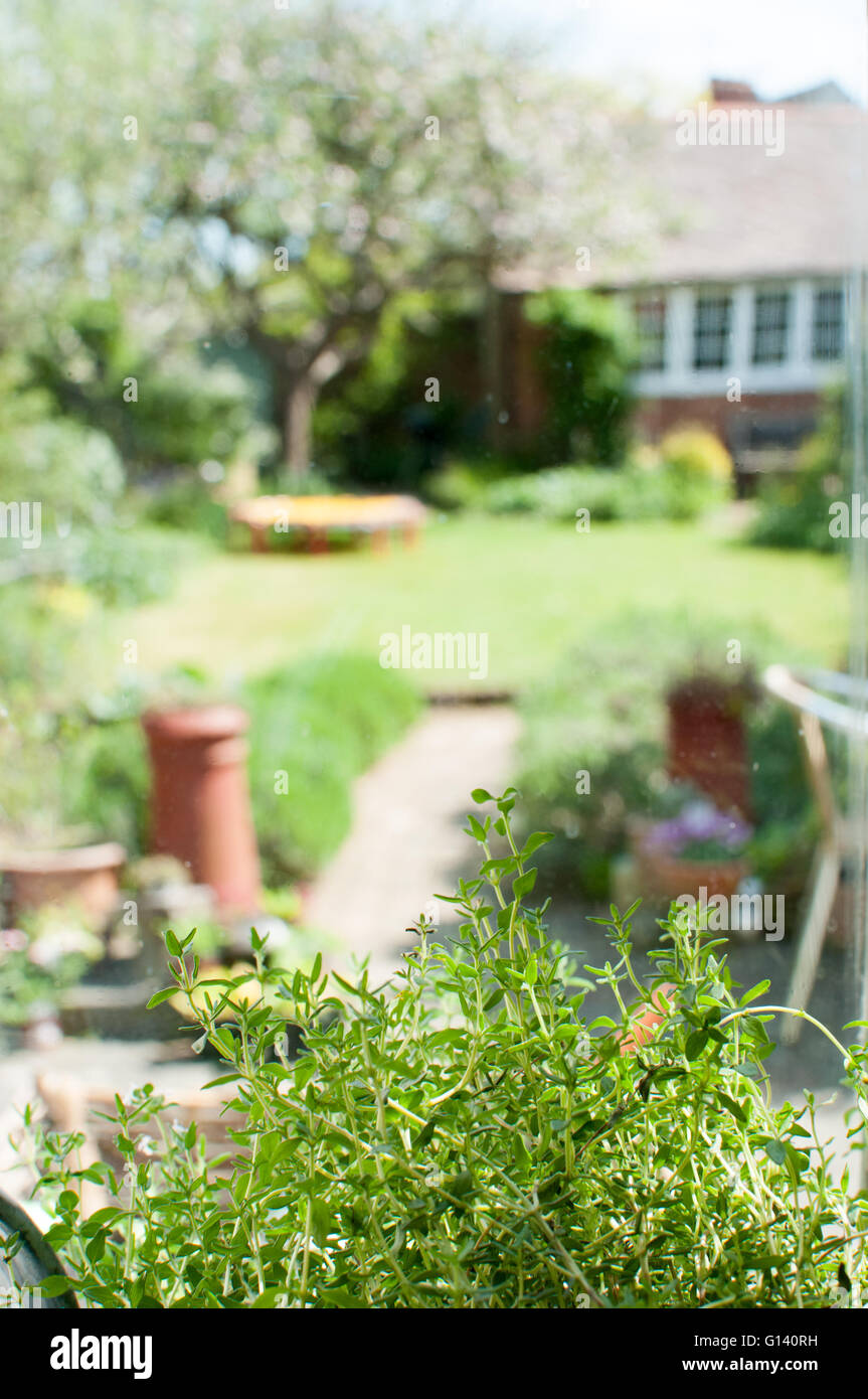Herbs growing in a window box with a sunny garden in the background - Stock Image