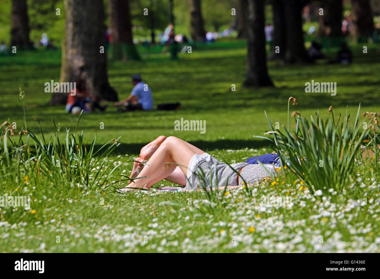 London, UK. 8th May 2016. Hot Summer Weather brings people out sunbathing in Green Park in London, England Credit: - Stock Image