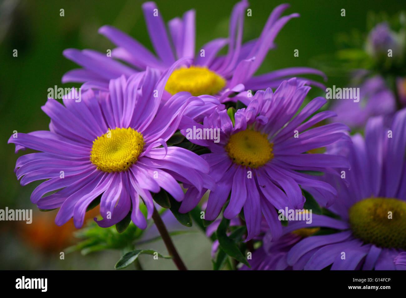 Blumen, Berlin. - Stock Image